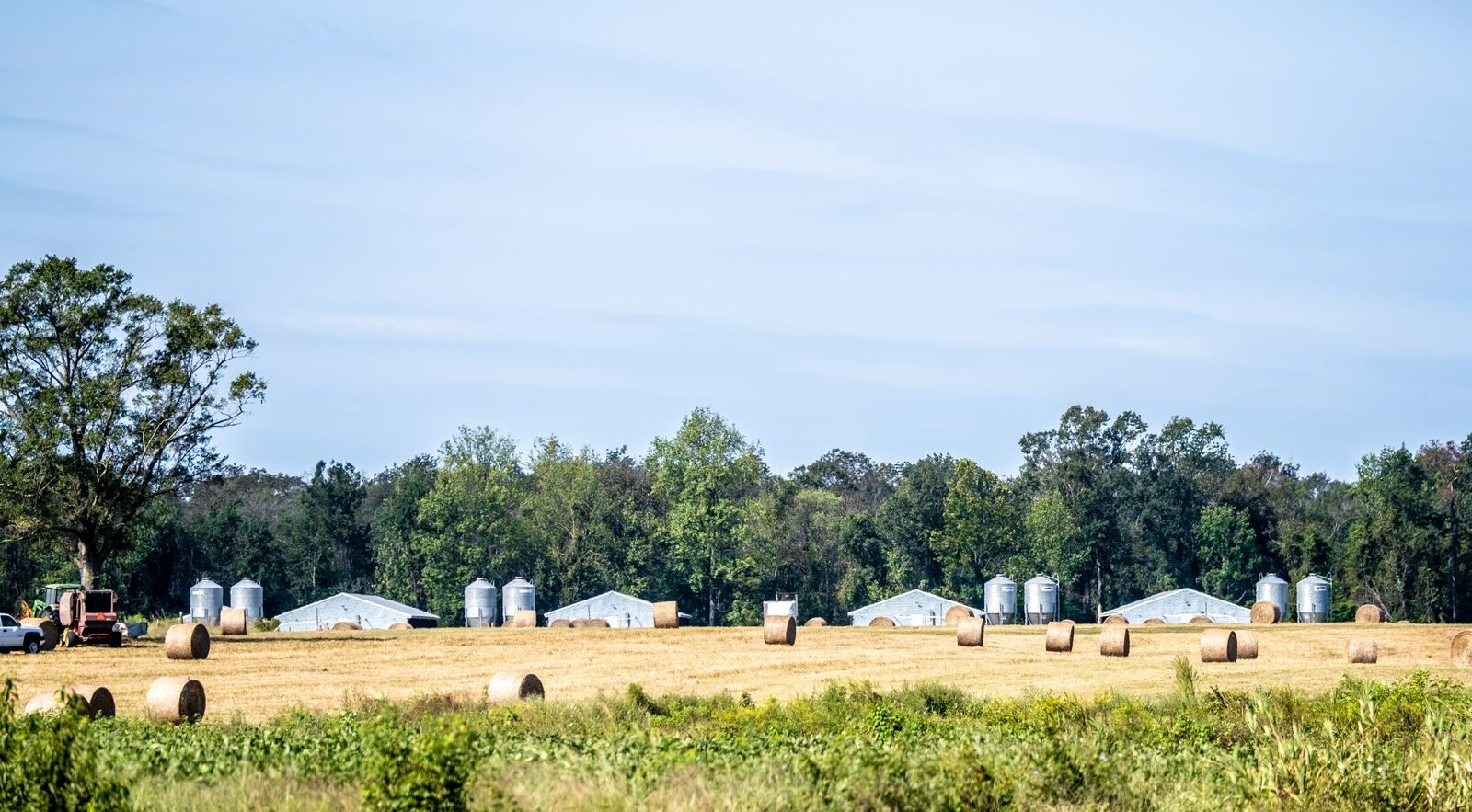 Pig farm in North Carolina